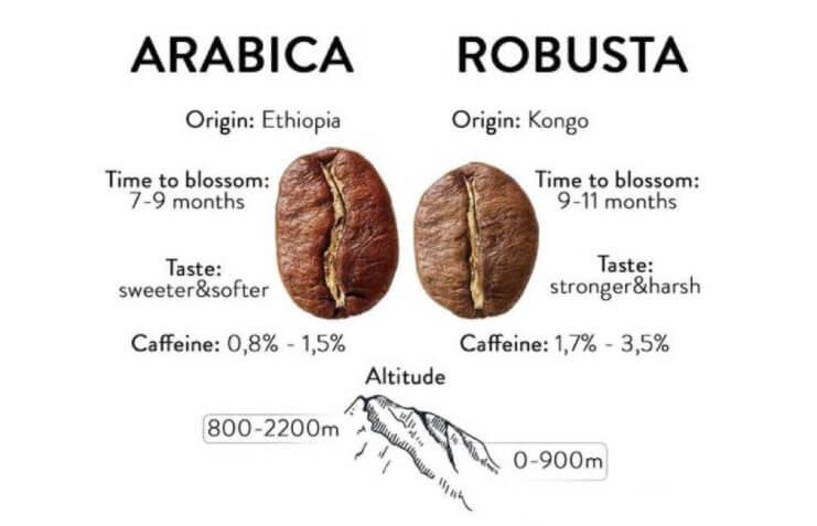 arabica és robusta kávéfajták