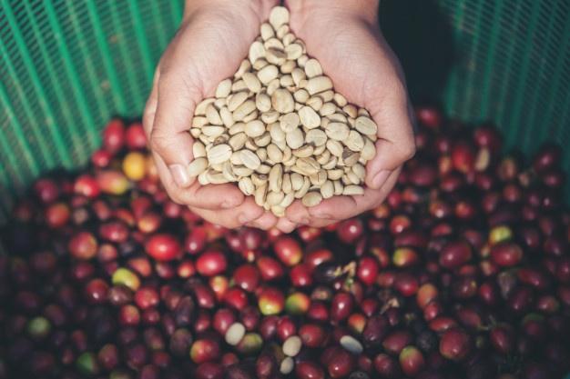 arabica kávé és robusta kávé